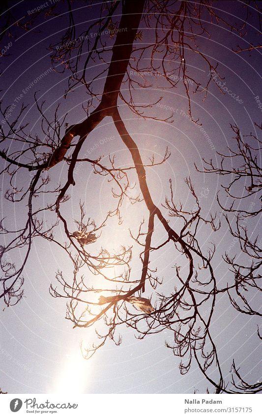 Künstliche Zierde Natur Pflanze Baum Stadt Menschenleer Holz Kunststoff hängen tragen blau schwarz Geäst Ast laublos Farbfoto Außenaufnahme Tag Licht