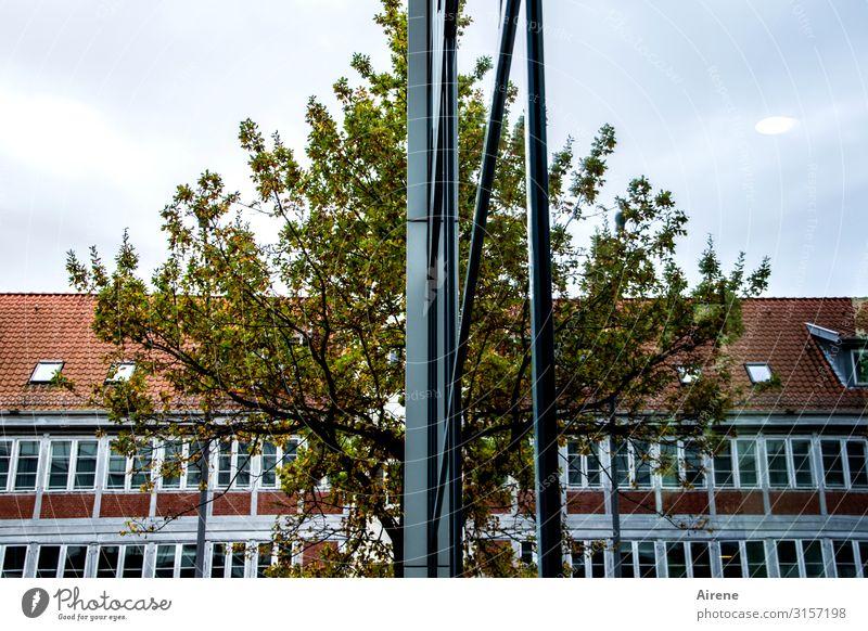 links H H rechts   UT Hamburg Baum Stadt Stadtzentrum Menschenleer Haus Gebäude Bürogebäude Fassade Glasfassade Spiegelbild Symmetrie Reflexion & Spiegelung
