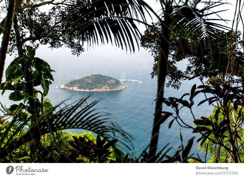Einsame Insel Ferien & Urlaub & Reisen Natur Sommer Pflanze blau grün Landschaft Baum Meer Erholung Tier Einsamkeit Blatt Wald Ferne Küste