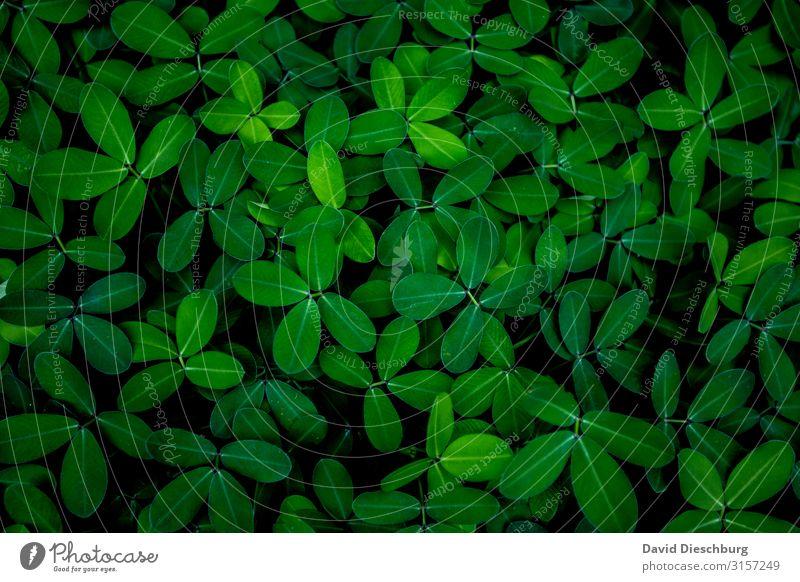 Grün Natur Landschaft Pflanze Frühling Sommer Herbst Blatt Grünpflanze Garten Park Wiese Wald grün schwarz Hintergrundbild Querformat Strukturen & Formen