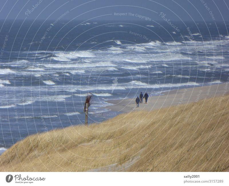 Sonntagsspaziergang... Mensch 3 Landschaft Dünengras Wellen Küste Strand Nordsee Meer Insel Erholung gehen wandern frei Gesundheit Zusammensein maritim