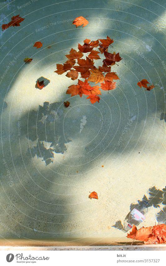 Jahreszeitenspiegel Natur Pflanze Blatt Herbst Umwelt Garten Park nass Klima Brunnen Herbstlaub herbstlich Herbstfärbung Herbstbeginn