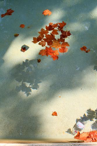Jahreszeitenspiegel Umwelt Natur Herbst Klima Pflanze Blatt Garten Park nass Herbstlaub herbstlich Herbstfärbung Herbstbeginn Brunnen Farbfoto Außenaufnahme