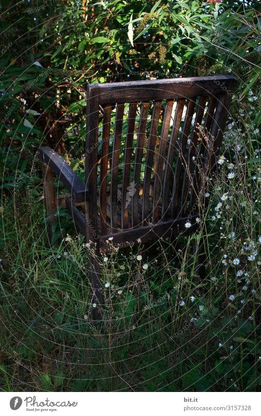 Sonne tanken, im Schatten. Umwelt Natur Landschaft Pflanze Klimawandel Gras Blatt Blüte Grünpflanze Garten Park Wald sitzen grün Stimmung Glück Zufriedenheit