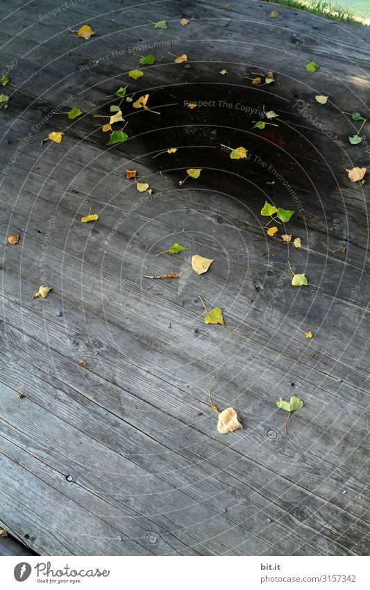 Der Herbst ist kein schwarzes Loch... Natur Klima Klimawandel Pflanze Baum Blatt Wandel & Veränderung Wege & Pfade Herbstlaub herbstlich Herbstfärbung