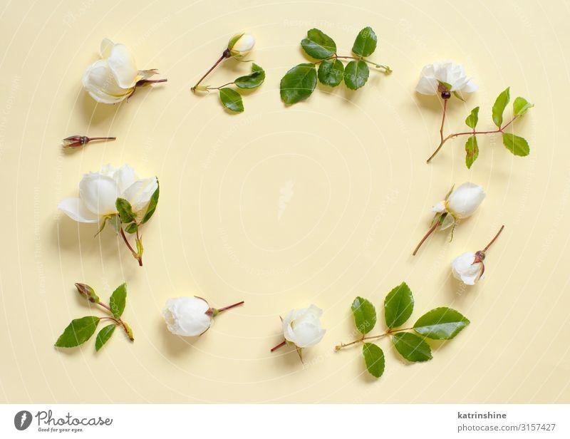 Blumen auf hellgelbem Hintergrund Dekoration & Verzierung Hochzeit Frau Erwachsene Mutter Rose oben Kreativität romantisch flache Verlegung Entwurf geblümt