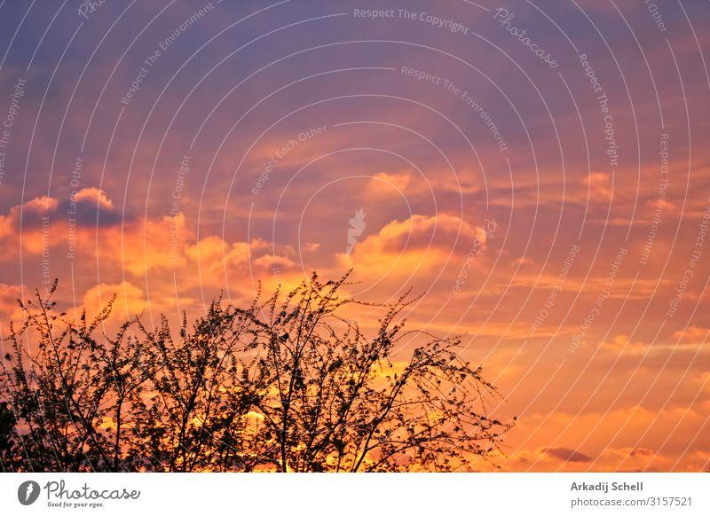Unglaublich schöne Wolkenformationen, Sonnenuntergang Farben hinter Bäumen. abstrakt Hintergrund Schönheit hell Cloud wolkig farbenfroh Morgendämmerung
