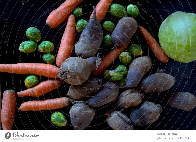 Gemüseallerlei Lebensmittel Rote Beete Möhre Rosenkohl Weißkohl Ernährung Vegetarische Ernährung Gesundheit Wohlgefühl Feste & Feiern Arbeit & Erwerbstätigkeit