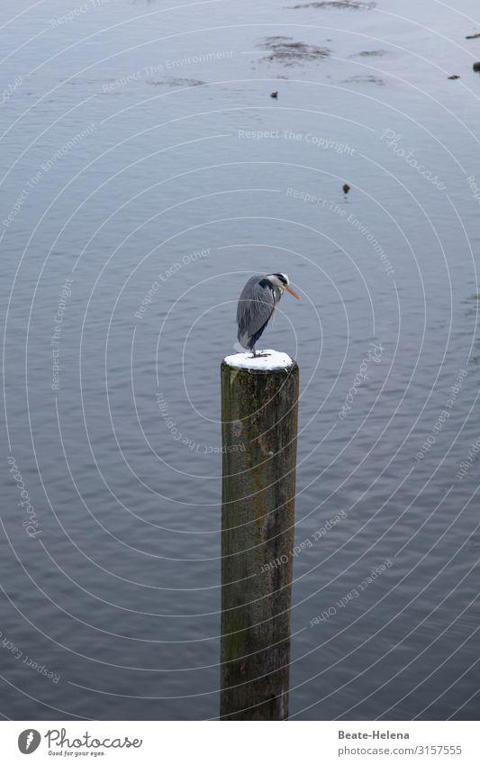 Warten auf den Frühling Natur schön Einsamkeit ruhig Umwelt Schnee Küste außergewöhnlich Vogel Stimmung Häusliches Leben Wetter elegant sitzen ästhetisch warten