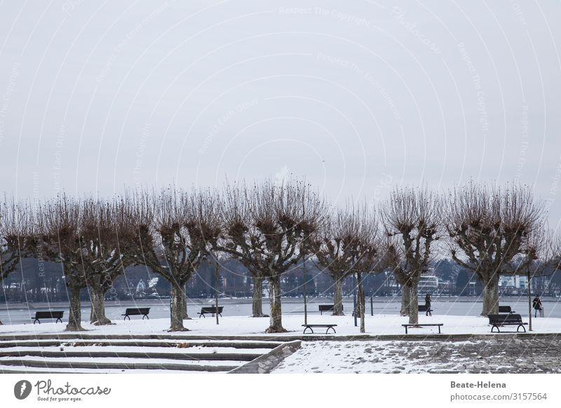 Winterfrische Mensch Himmel Landschaft Baum ruhig Straße kalt Schnee Küste Bewegung Freizeit & Hobby wandern Eis Wetter sitzen