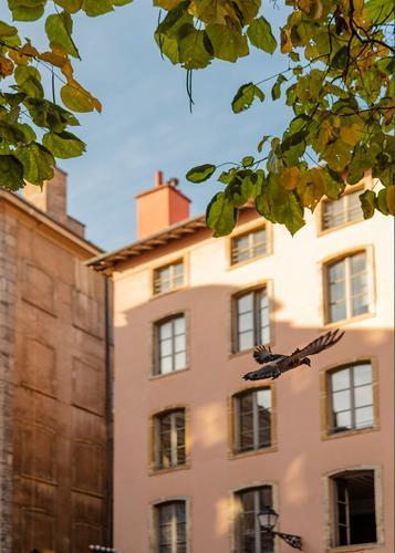 Kommt eine Taube Haus Tier Blatt Herbst Wand Mauer Vogel fliegen hell Wildtier Städtereise Altstadt Wolkenloser Himmel Lyon