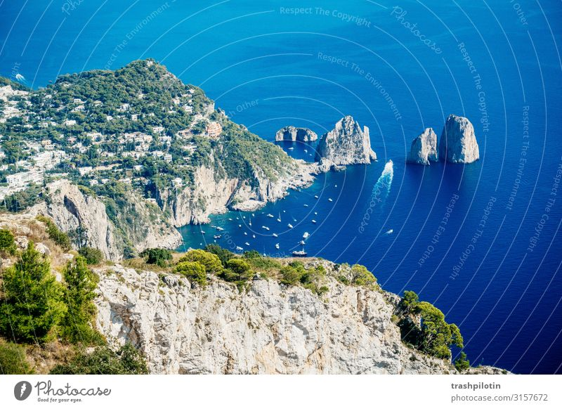 Capri Ferien & Urlaub & Reisen Tourismus Ausflug Abenteuer Ferne Freiheit Sightseeing Städtereise Kreuzfahrt Sommer Sommerurlaub Sonne Meer Insel Wellen Natur