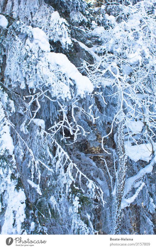 Baby, it`s cold outside Winter Schnee Winterurlaub Natur Wetter Eis Frost Schneefall Baum Wald Schwarzwald atmen frieren kalt Gelassenheit ruhig Ausdauer