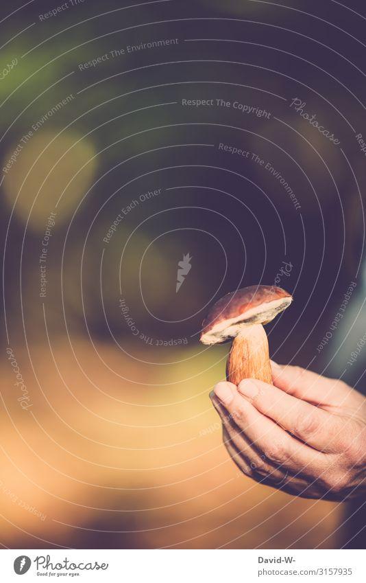 Pilze sammeln - Steinpilz Herbst essbar Wald Hand gepflückt frisch Delikatesse