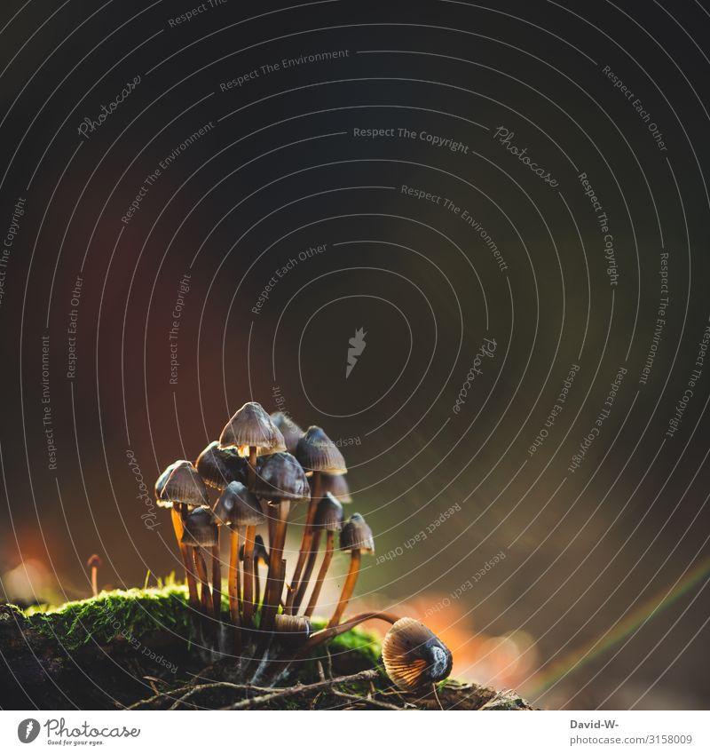 Gruppenfoto Lebensmittel Ernährung Umwelt Natur Landschaft Pflanze Tier Urelemente Wasser Herbst Klima Klimawandel Wald außergewöhnlich Pilz mehrere Anweisung