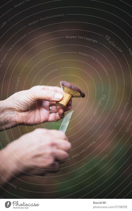 Pilze sammeln II Mensch feminin Frau Erwachsene Leben 1 Kunst Umwelt Natur Herbst Klima Wetter Schönes Wetter Pflanze Wald beobachten Sammlung Finger Hand