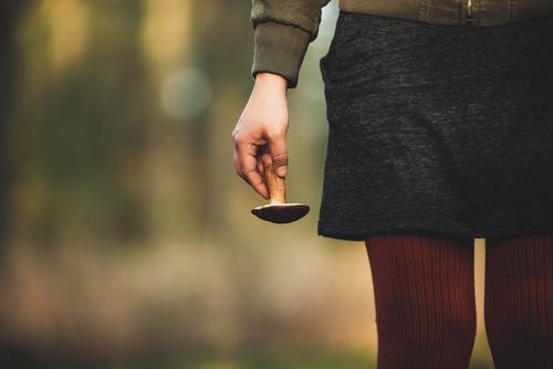 Pilze sammeln Mensch feminin Junge Frau Jugendliche Erwachsene Leben Hand 1 Kunst Natur Schönes Wetter Pflanze Wald entdecken Sammlung finden Steinpilze