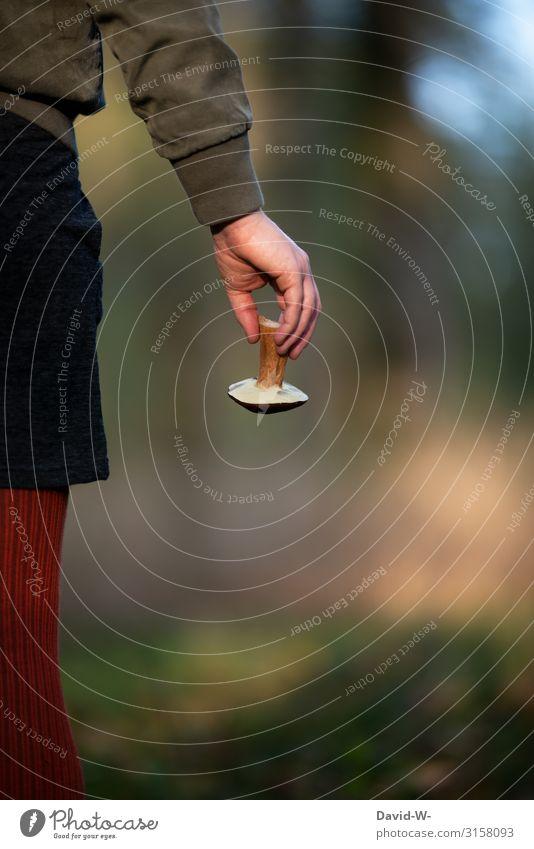 Pilzsammlerin hält einen Pilz in den Händen Steinpilz sammeln Herbst herbstlich Jahreszeiten braun essbar frisch Wald Natur Junge Frau