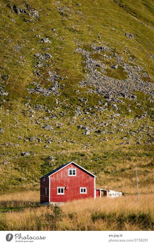 Haus vorm Berg Ferien & Urlaub & Reisen Gras Wiese Hügel Norwegen Skandinavien Nordland Lofoten Einfamilienhaus Hütte Fassade grün rot Einsamkeit Tourismus