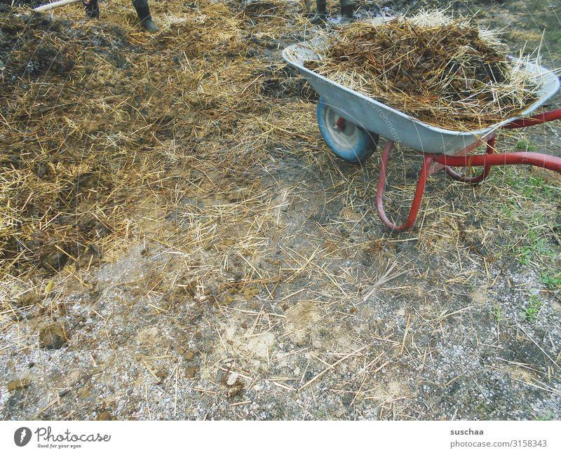 nen haufen mist Misthaufen Kot Bauernhof dreckig Übelriechend Landleben Landwirtschaft Außenaufnahme Schubkarre ländlich Vieh Stall Nutztier Kuh Schwein
