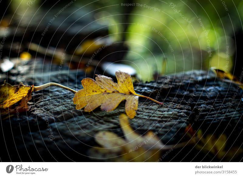 Fallin' leaves! Herbst Wald Blatt Herbstwald stimmungsvoll Licht Schatten