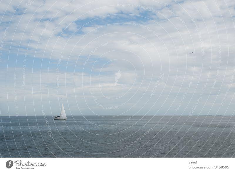 An der Nordsee Ferien & Urlaub & Reisen Sommerurlaub Meer Segeln Wasser Himmel Wolken Segelboot Vogel Möwe 1 Tier Erholung genießen schaukeln authentisch