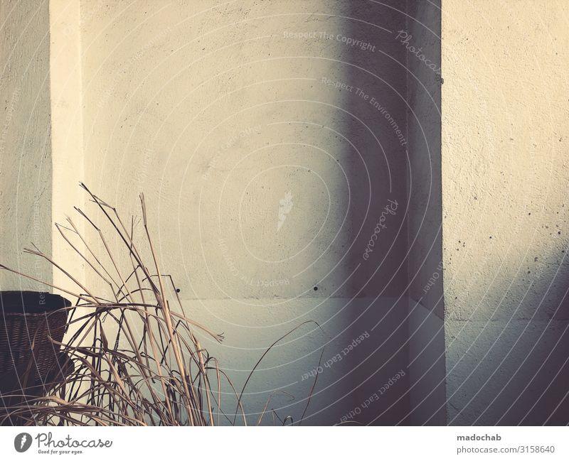 tristesse royale Klima Klimawandel Pflanze Mauer Wand Fassade Stein Beton dreckig hässlich kaputt Unlust Fernweh Enttäuschung Einsamkeit Erschöpfung