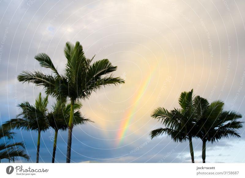 Meine Wellenlänge Himmel schön Wolken Wärme Glück oben Stimmung leuchten frei Schönes Wetter Romantik Hoffnung harmonisch Kitsch exotisch Palme