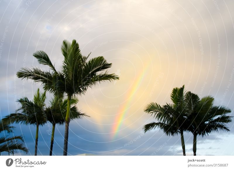 Meine Wellenlänge Himmel Wolken Schönes Wetter Wärme Palme Regenbogen exotisch Kitsch Glück Romantik Idylle Inspiration Leichtigkeit harmonisch Naturphänomene