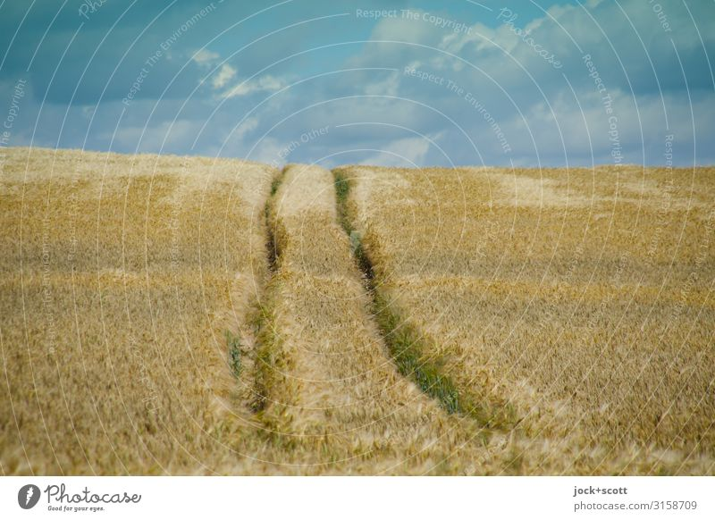 Sommerweizen Himmel Landschaft Wolken lang Klimawandel Weizen Weizenfeld Müritz Spurrinne
