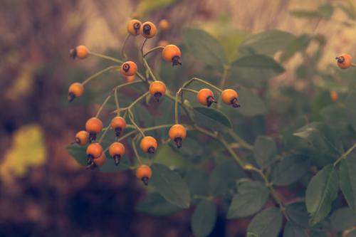 Herbstfrüchte Natur Pflanze Sträucher Park Blühend entdecken verblüht Wachstum orange Erholung Freizeit & Hobby Farbfoto mehrfarbig Außenaufnahme Tag Schatten
