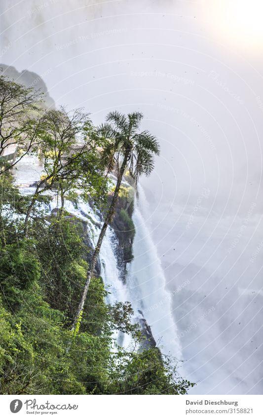 Iguazu Ferien & Urlaub & Reisen Ausflug Sightseeing Expedition Natur Landschaft Pflanze Tier Wasser Schönes Wetter Baum Fluss Wasserfall Abenteuer Erholung
