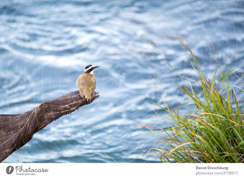Warten am wilden Wasser Ferien & Urlaub & Reisen Natur Pflanze blau Landschaft Erholung Tier schwarz gelb Gras Vogel Wildtier sitzen Idylle Abenteuer