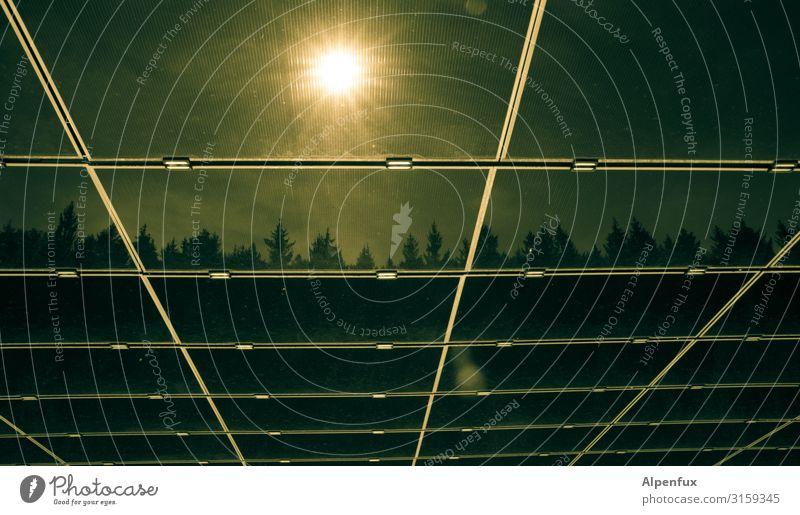 Endzeitstimmung Baum Umwelt Angst Wetter Energiewirtschaft Technik & Technologie Schönes Wetter Zukunft gefährlich Klima bedrohlich Hoffnung Todesangst