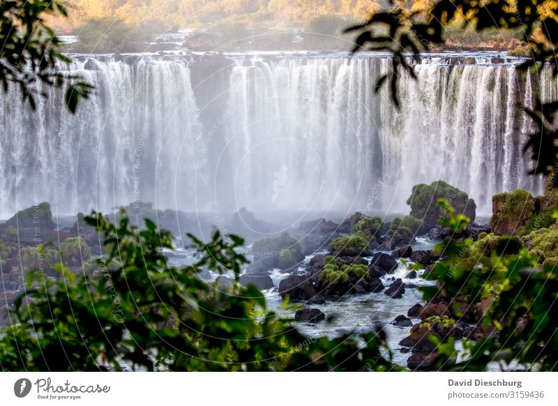 Iguassu Ferien & Urlaub & Reisen Ausflug Abenteuer Sightseeing Expedition Natur Landschaft Pflanze Tier Wasser Schönes Wetter Wald Urwald Wellen Fluss