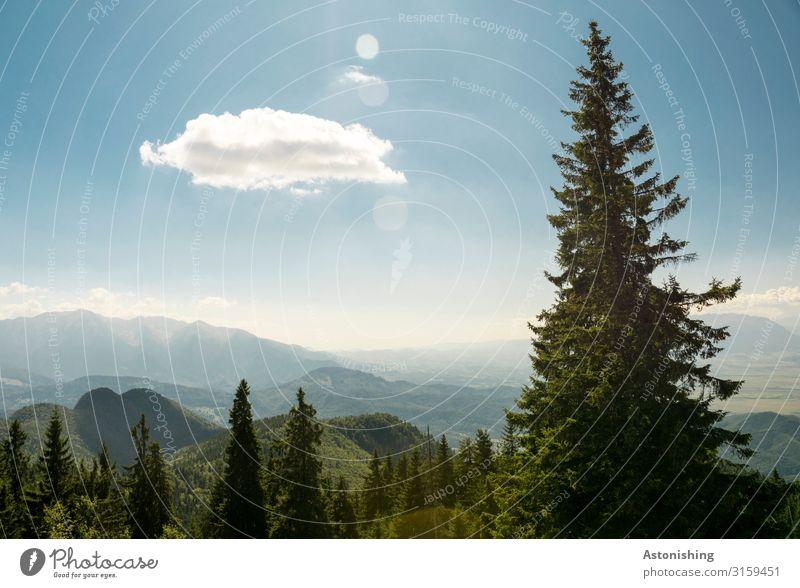 Wolke vs. Baum Umwelt Natur Landschaft Pflanze Luft Himmel Wolken Horizont Sonnenlicht Sommer Wetter Schönes Wetter Nadelbaum Wald Hügel Felsen Berge u. Gebirge