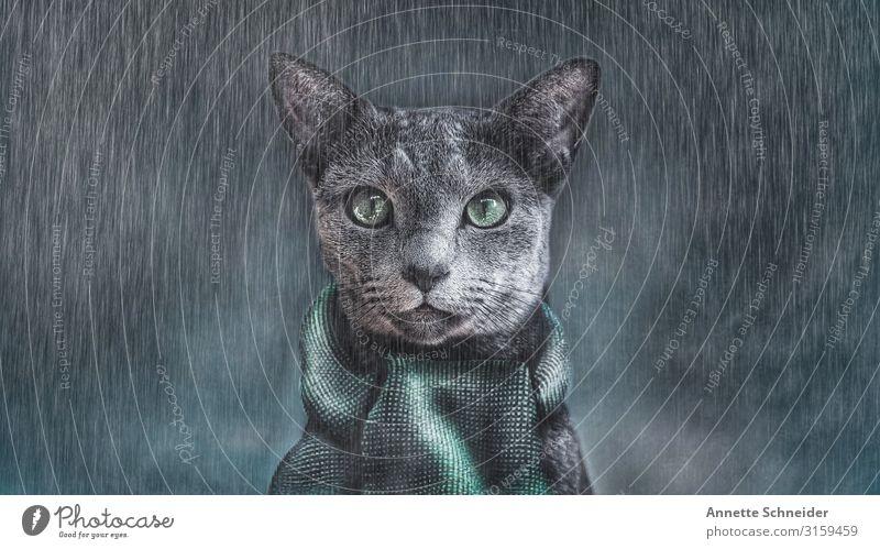 It's cold outside Tier Haustier Katze Tiergesicht 1 Schal grau grün schwarz Farbfoto Außenaufnahme Hintergrund neutral Blick in die Kamera