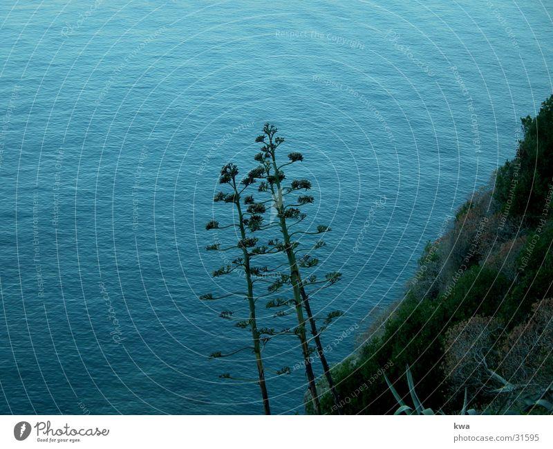 CINQUE TERRE Küste Meer