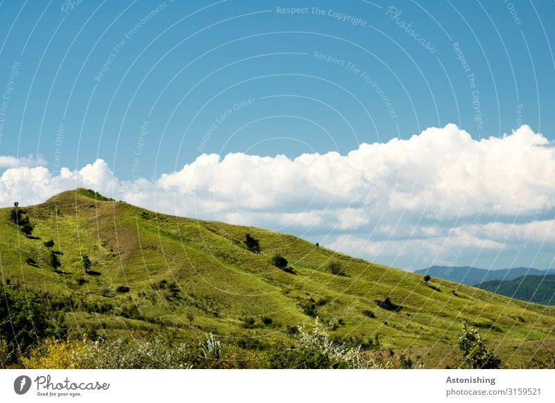 grüner Hügel Umwelt Natur Landschaft Pflanze Luft Himmel Horizont Sommer Wetter Schönes Wetter Gras Sträucher Wiese Berge u. Gebirge Karpaten Gipfel Rumänien