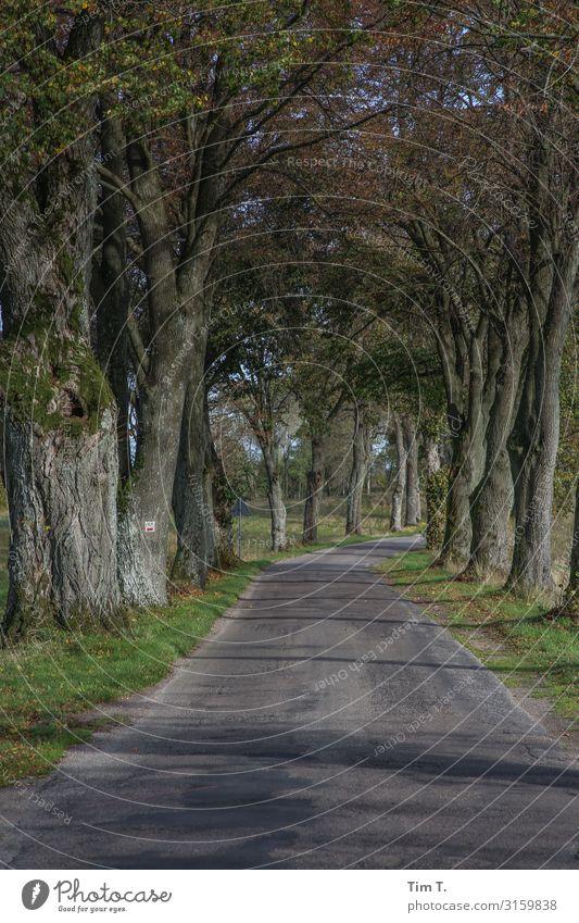 Pommern Umwelt Natur Landschaft Baum Polen Menschenleer Verkehr Verkehrswege Straße Ferien & Urlaub & Reisen Tourismus Herbst Allee Farbfoto Außenaufnahme Tag