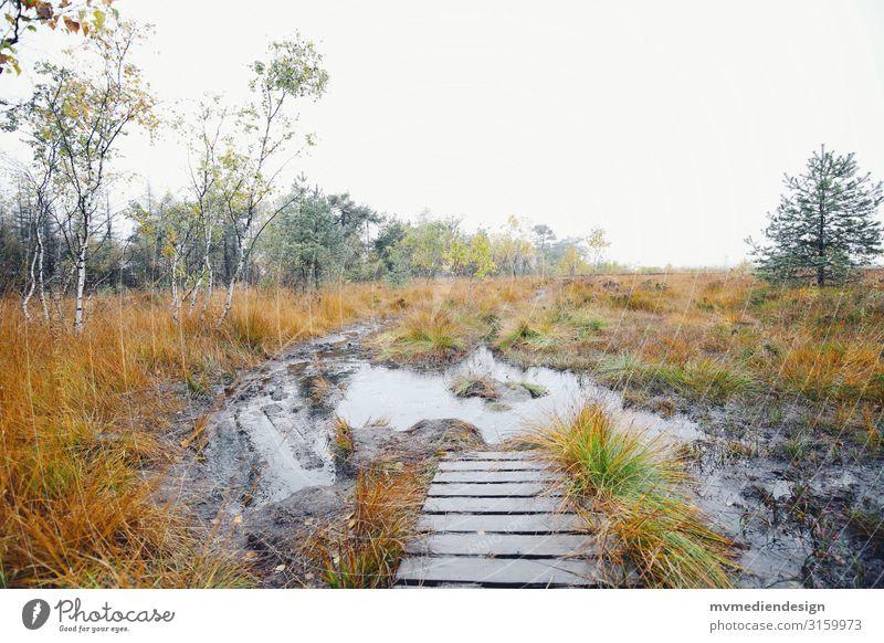 Moorsteg Umwelt Natur Landschaft Erde Wasser Herbst schlechtes Wetter kalt nass Steg wandern Naturschutzgebiet Farbfoto Außenaufnahme Menschenleer