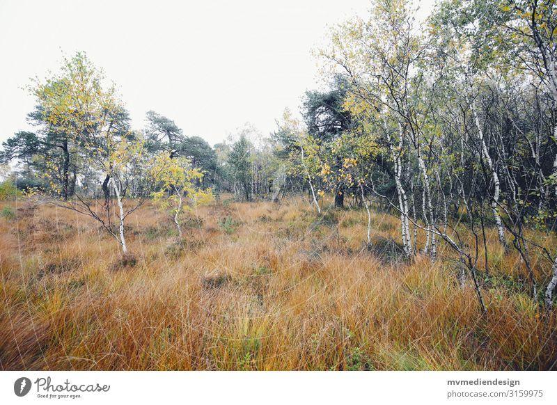 Natur Umwelt Landschaft schlechtes Wetter Baum Sträucher kalt nass natürlich Birke Farbfoto Außenaufnahme