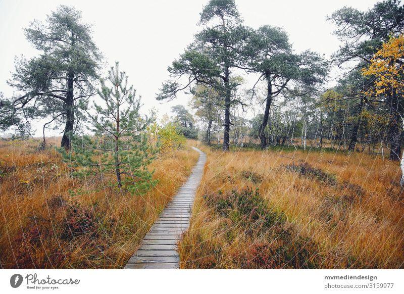 Hohes Venn Belgien Pfad Wege & Pfade Natur