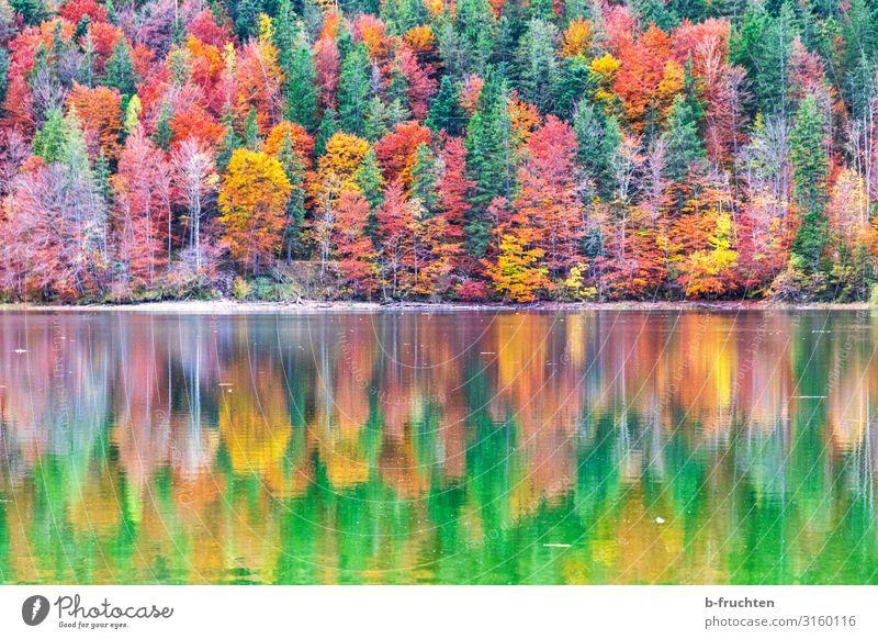 Bunter Herbstwald mit Spiegelung im Wasser Ferien & Urlaub & Reisen Ausflug Berge u. Gebirge wandern Natur Landschaft Schönes Wetter Pflanze Baum Blatt Wald