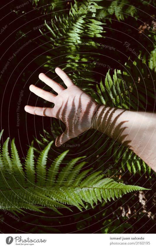 der mann hand in den schatten in der natur Hand Schatten Lichterscheinung Sonnenlicht Silhouette Finger Handfläche Körper Handgelenk Arme Haut Mensch