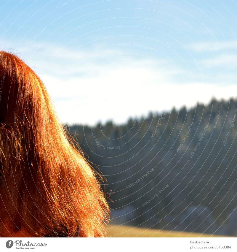 weitsichtig | Schwarzwaldblick feminin Frau Erwachsene 1 Mensch Natur Landschaft Himmel Winter Eis Frost Wald rothaarig Blick stehen hell kalt blau Gefühle
