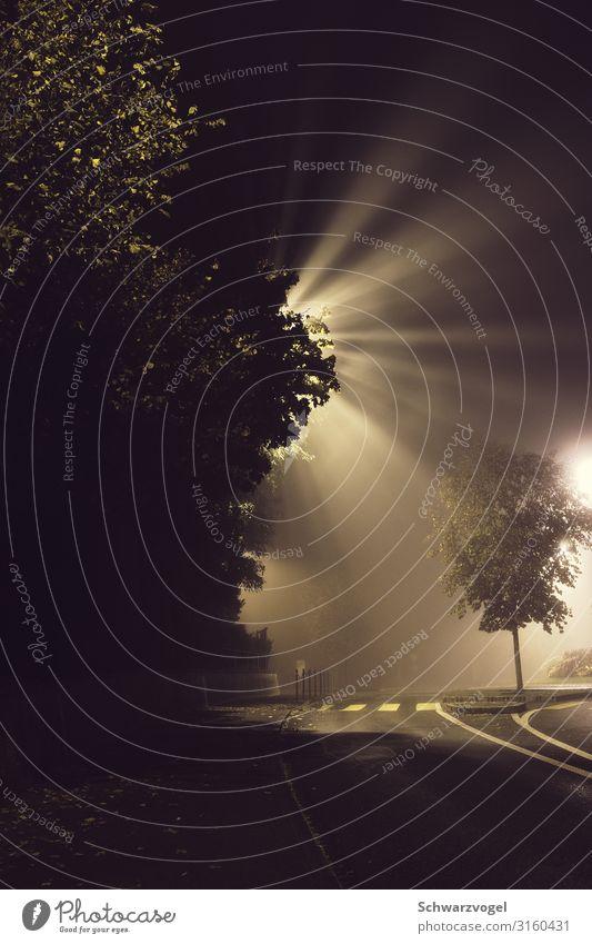 the midnight special (shine a light on me) grün Baum Einsamkeit ruhig schwarz Straße Beleuchtung Wege & Pfade Gefühle grau Stimmung leuchten Nebel Hoffnung