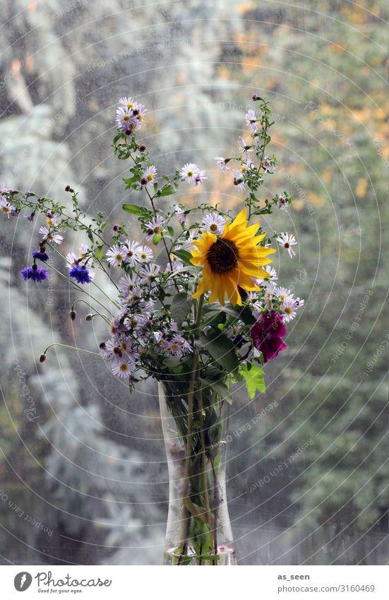 Sonnenblume am Fenster Häusliches Leben Wohnung Dekoration & Verzierung Erntedankfest Umwelt Natur Sommer Herbst Pflanze Astern Herbstblumen Garten Blumenstrauß