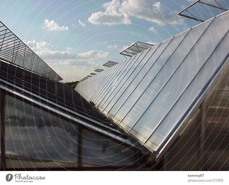 wolken ziehen Wolken Gewächshaus Dach Abendsonne Architektur Glas Himmel