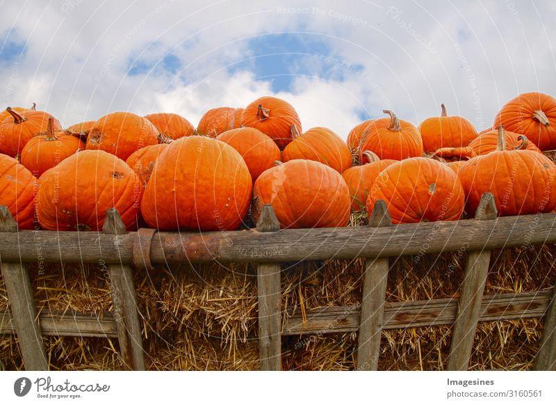 Anhänger Halloween Kürbisse Gemüse Ernährung Bioprodukte Vegetarische Ernährung Diät Kürbiszeit Kürbisgewächse Natur Herbst Karre Pferdekutsche lecker orange